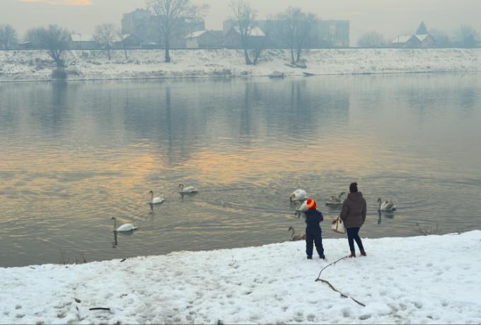 Brođani se i ove godine druže s labudovima, ako možete ponesite im kukuruza