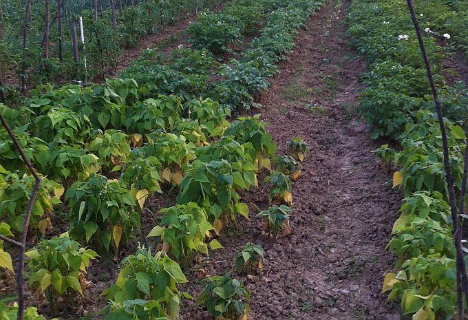Otvoreno 5 natječaja za ulaganja u poljoprivredna gospodarstva vrijednih 600 mil. kuna