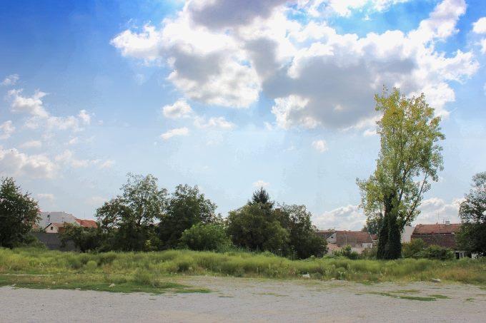 Izmjerene visoke koncentracije peludi trava u zraku