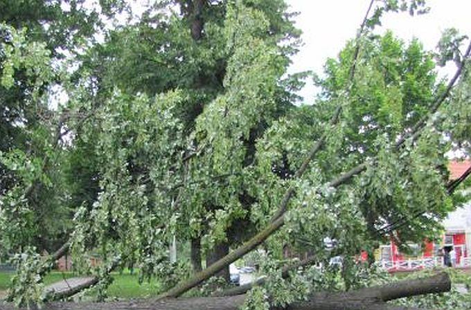 Noćas do dva sata uklonjena stabla s cesta, kvarovi uglavnom otklonjeni