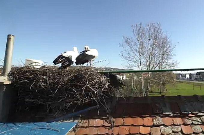 Inicijativa za primjer drugima, vlasnicima kuća za gnijezdo bijele rode 700 kuna naknade