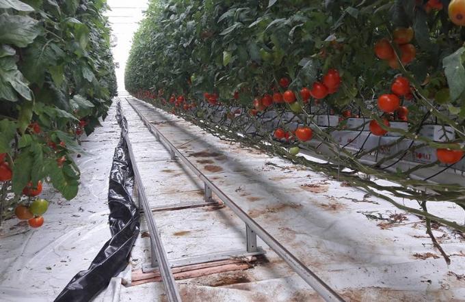 U ponedjeljak počinje isplata 922 milijuna kuna poljoprivrednicima