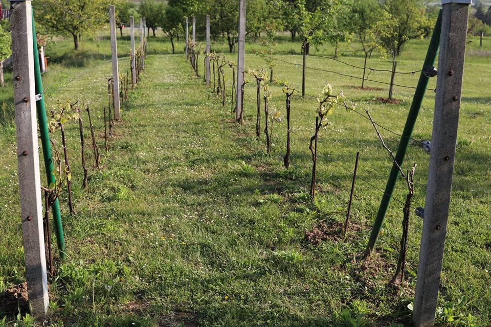 Slavonija na rasprodaji: Kuća s 20.500 m2 vrta, voćnjaka, vinograda i oranica - 9000 eura