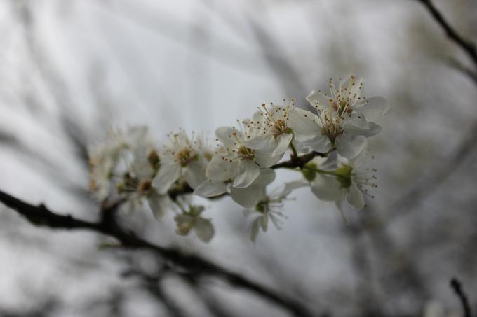 Proljetna alergija - prirodni načini liječenja
