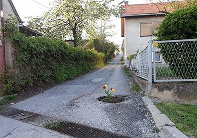 Stanari Naselja Marinci skreću pozornost na rupe u asfaltu sadnjom cvijeća