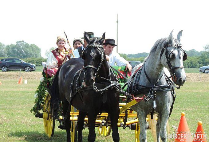 Danas je Trnjanskim Kutima prošla svečana povorka svatovskih zaprega, najljepša iz Velike Kopanice
