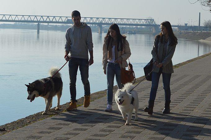 """Grad radi na """"Odluci o uvjetima i načinu držanja kućnih ljubimaca"""", brojni gradovi odlučili su se za sterilizaciju pasa i mačaka kao obavezu vlasnika"""