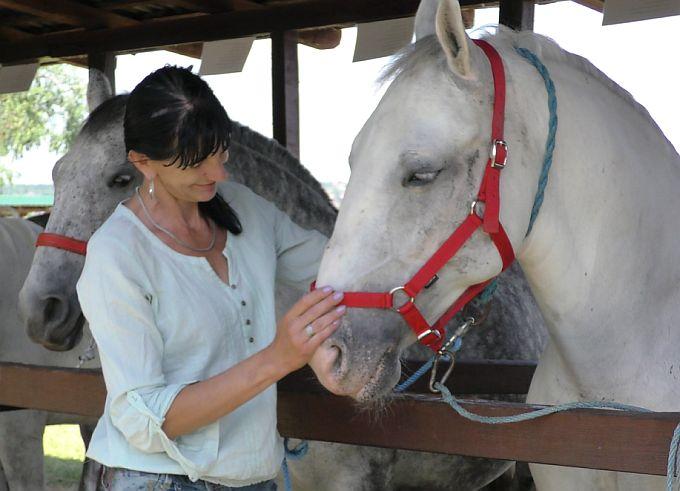 Ovogodišnji šampion pasmine lipicanac je grlo Mate Kaluđera: Konji su ljubav