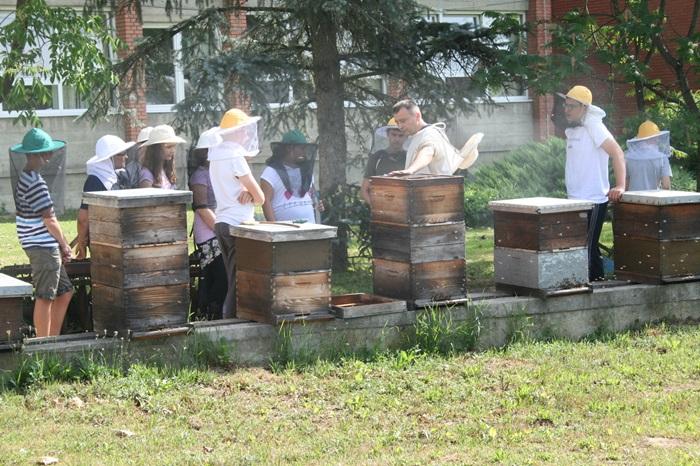 30 učenika iz sedam osnovnih škola u radu s košnicama i pregledavanju pčelinje zajednice