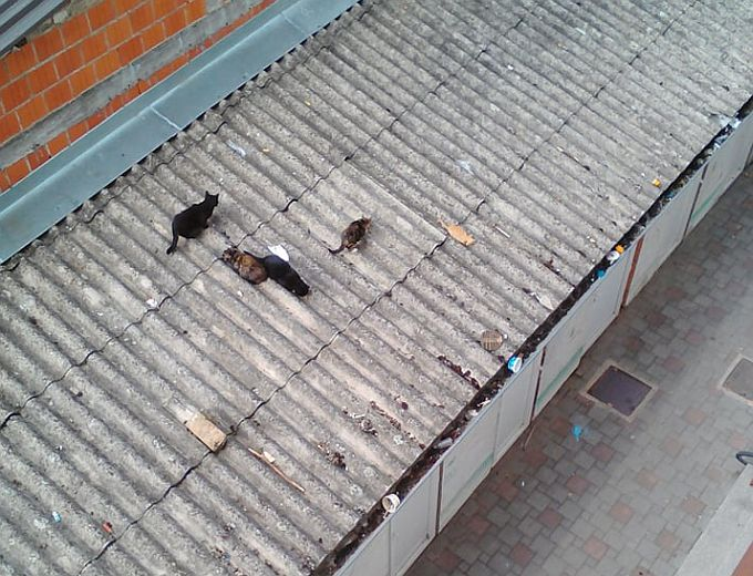 Brodska nekultura i nebriga za okoliš, bacamo otpad s balkona na krov ?