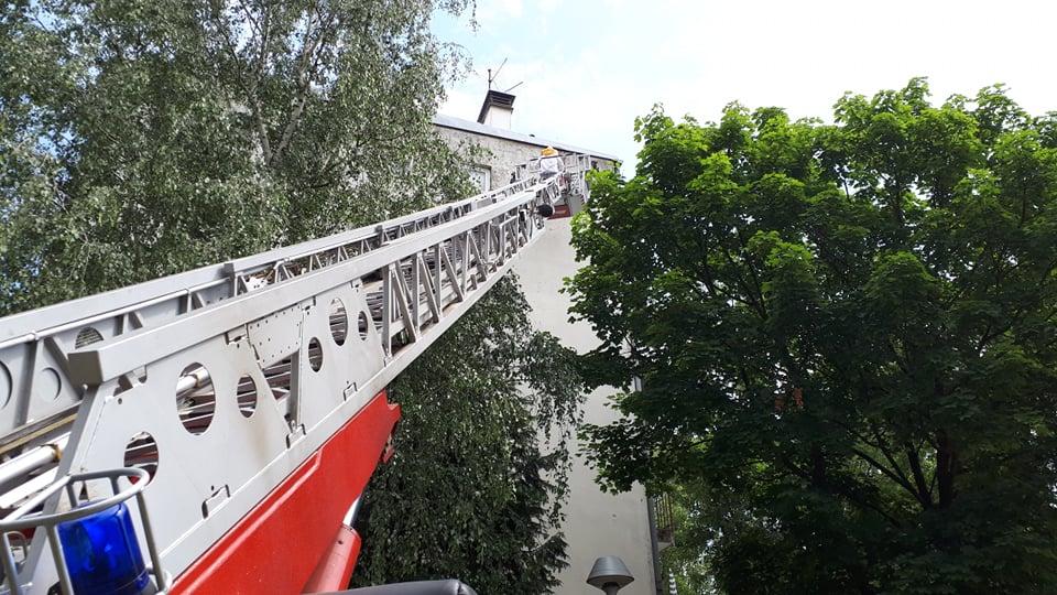 Danas u akciji vatrogasci i pčelar, skidali su roj pčela sa zgrade u naselju Mikrorajon