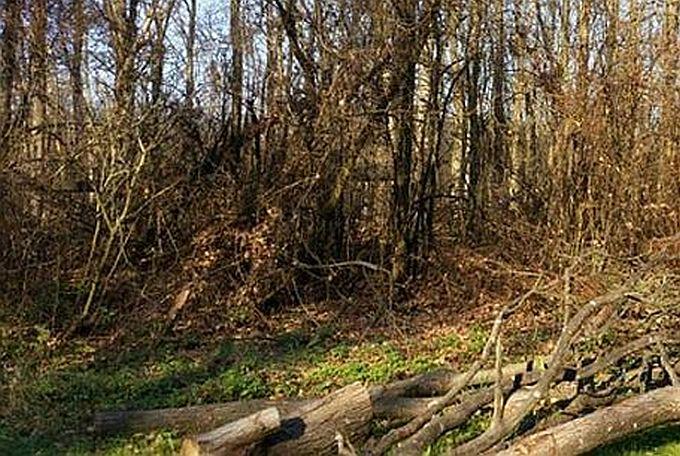 Zbog krađe drva u Podcrkavlju mladiću kaznena prijava