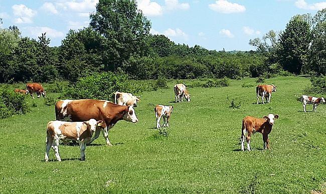 Javni poziv poljoprivrednicima za mjeru 4.1.1,  HSS-u izgleda kao pogodovanje malom broju gospodarstava