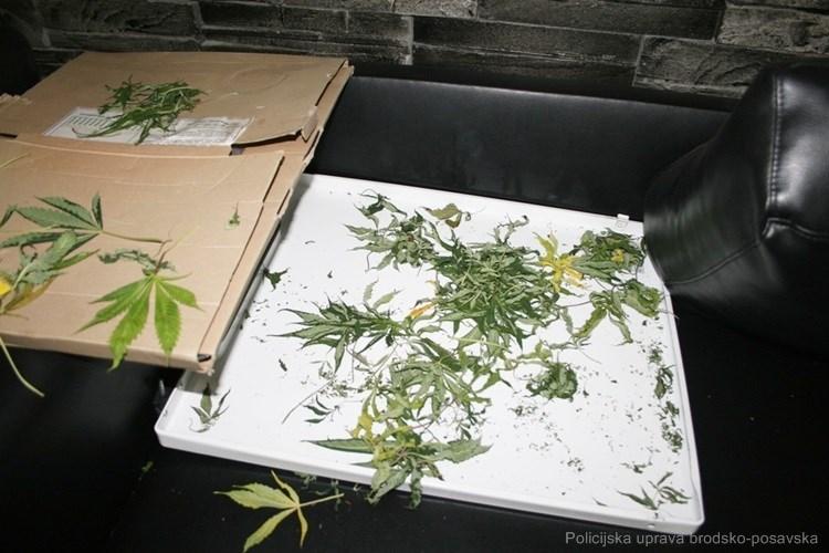 Neovlašteno posjedovao drogu i oružje: 25-godišnjak uzgajao i preprodavao kanabis