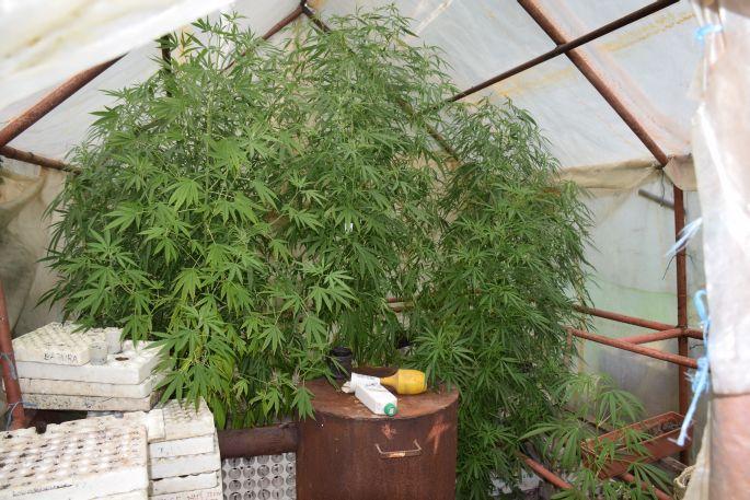 Kod 26-godišnjaka pronašli 7 grama marihuane