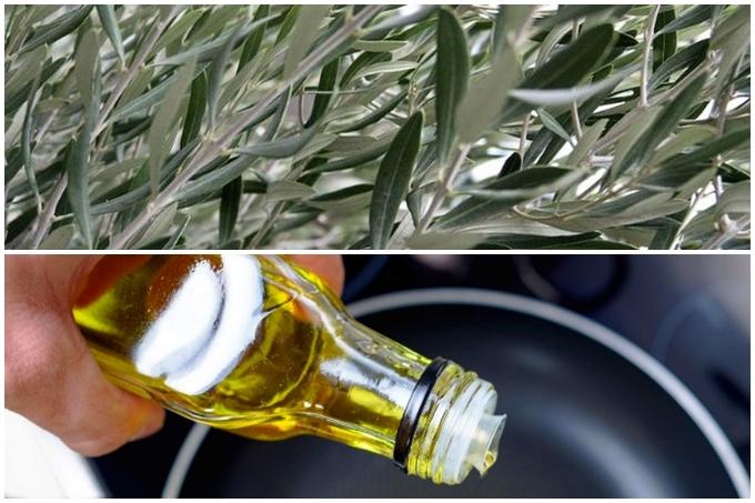 Pročitajte kako odabrati i čuvati maslinovo ulje