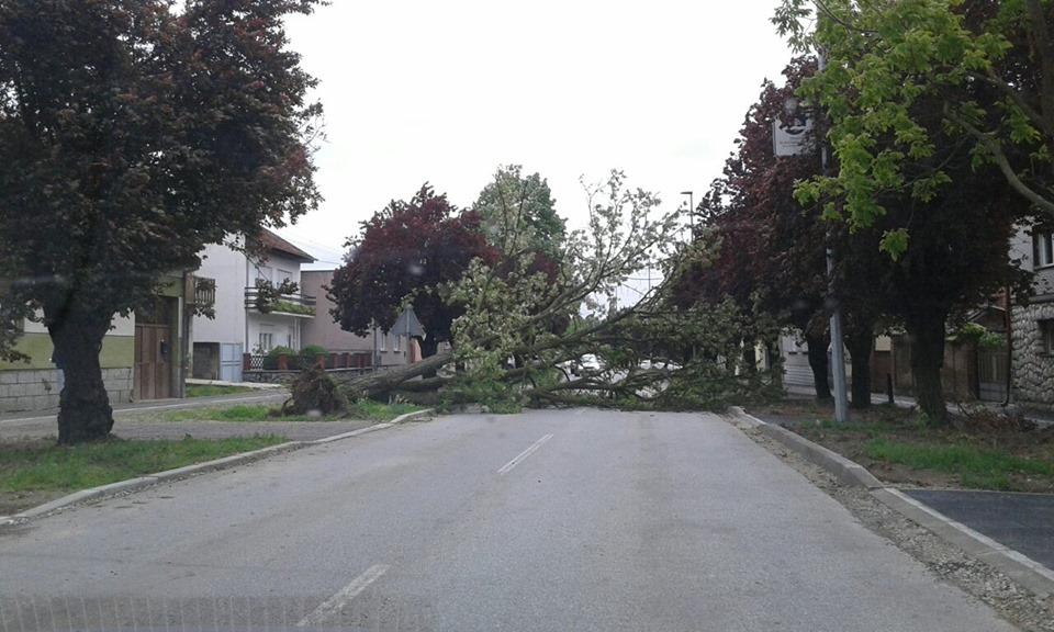 Stablo je na cestu palo i u Zagrebačkoj ulici